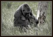 29th May 2012 - Precious Moments