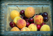 1st Jun 2015 - Apricots and cherries