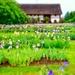 Farm in an iris field. by cocobella