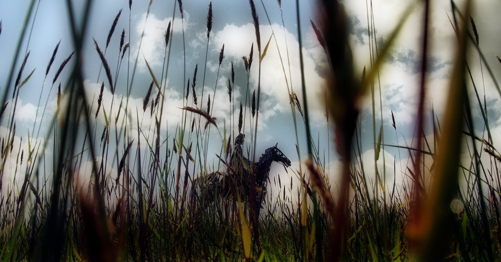 Hiding in the long grass by jack4john