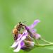 Buzzing around! by fayefaye