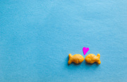 2nd Jun 2015 - (Day 109) - 2 Lovey-Dovey Goldfishes