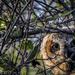 Peek-A-Whooo! by elatedpixie