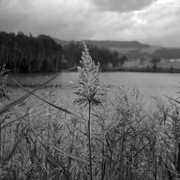 3rd Jun 2015 - Rushes