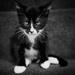 Grumpy Kitty by lesip