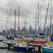It's a grey ol' day in Melbourne! by gigiflower