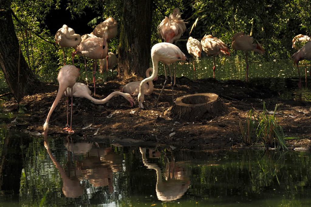 Flamingos by bizziebeeme