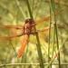 Pole Dancer by joysfocus
