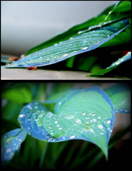 Raindrops by calm