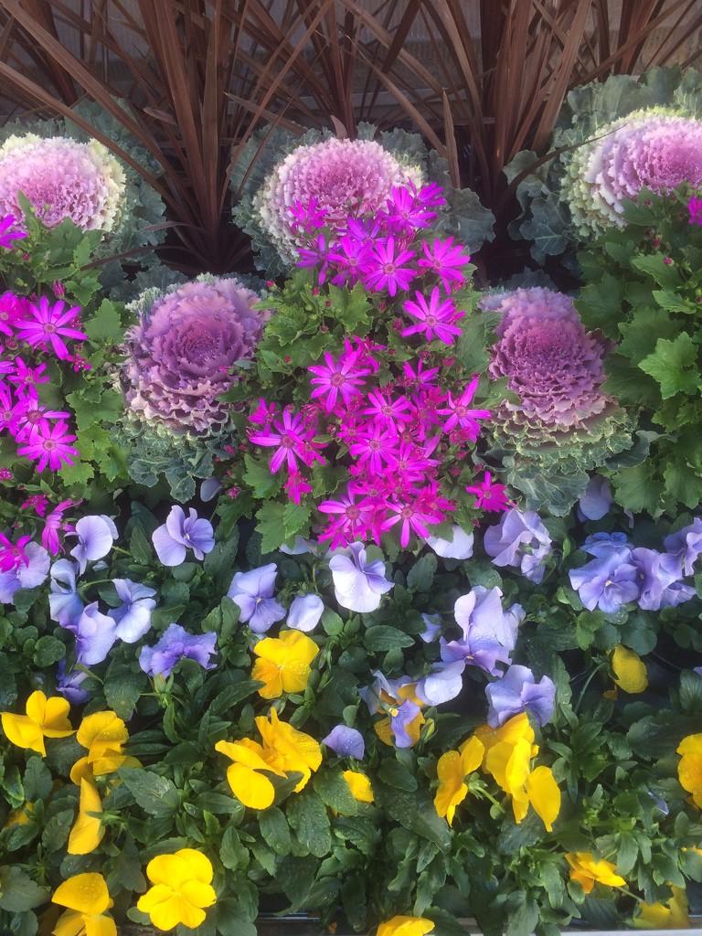 Funky flowerbed by alia_801