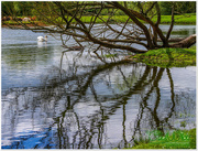 6th Jun 2015 - Reflected Branches
