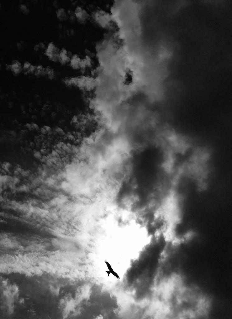 Dark sky... by cocobella