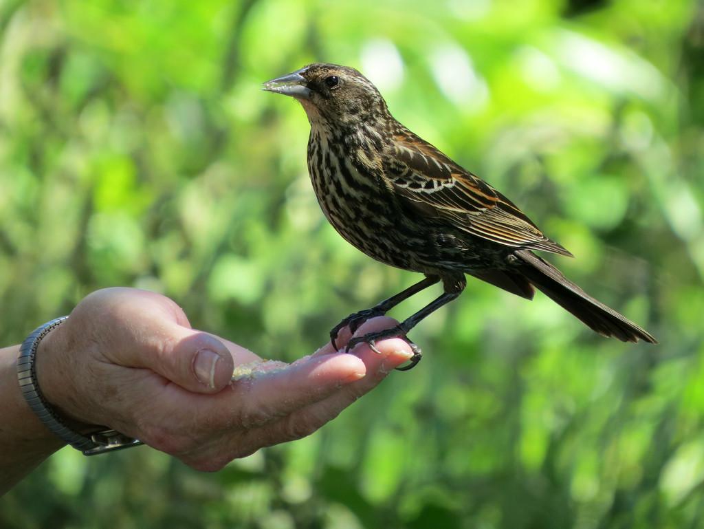 Bird Lady With Snacks by seattlite