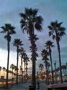 10th Nov 2010 - Palm Rows