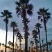 Palm Rows by bradsworld