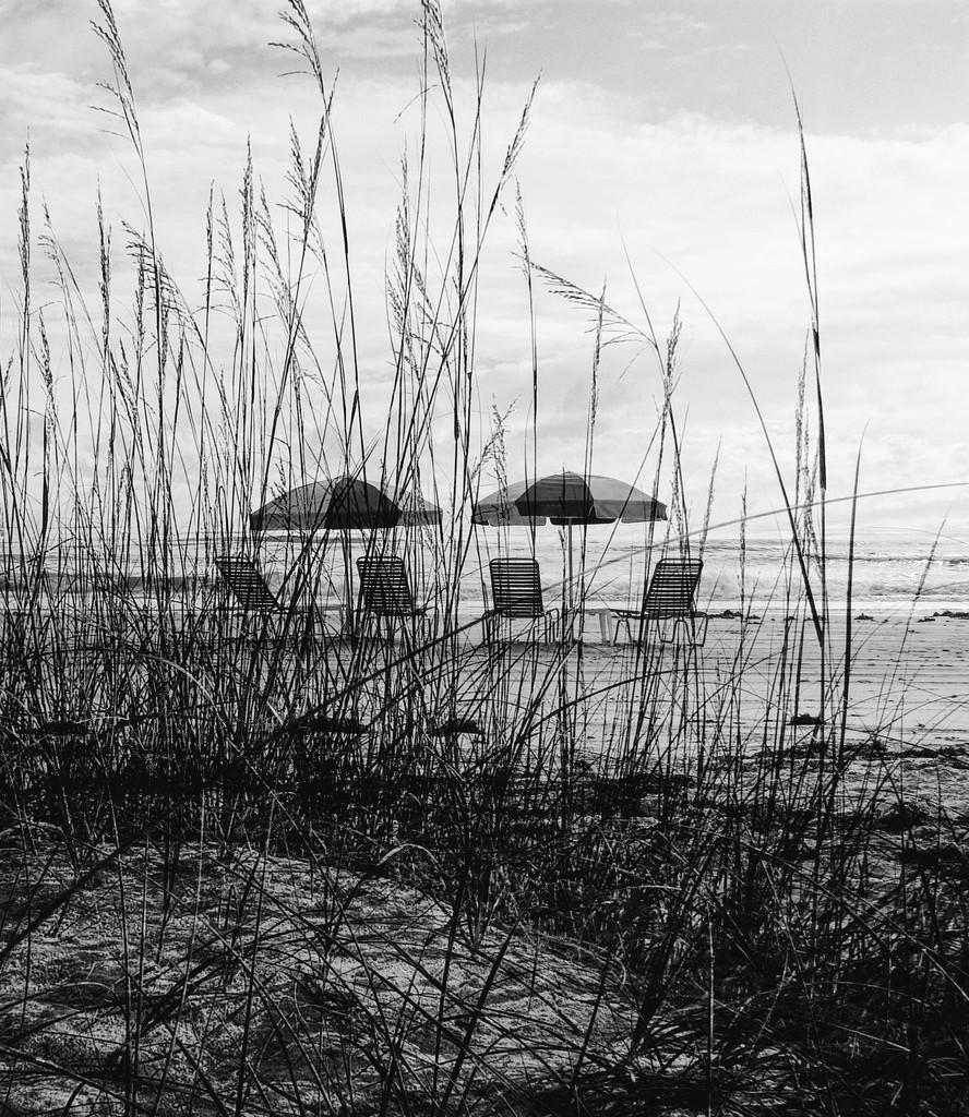 Beach and bushes by joemuli