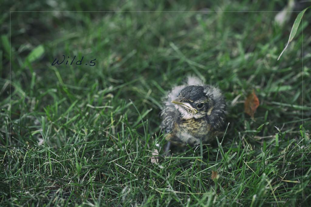 Baby Bird by lyndemc