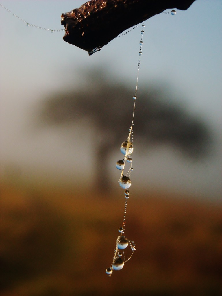 Pendulum by wenbow