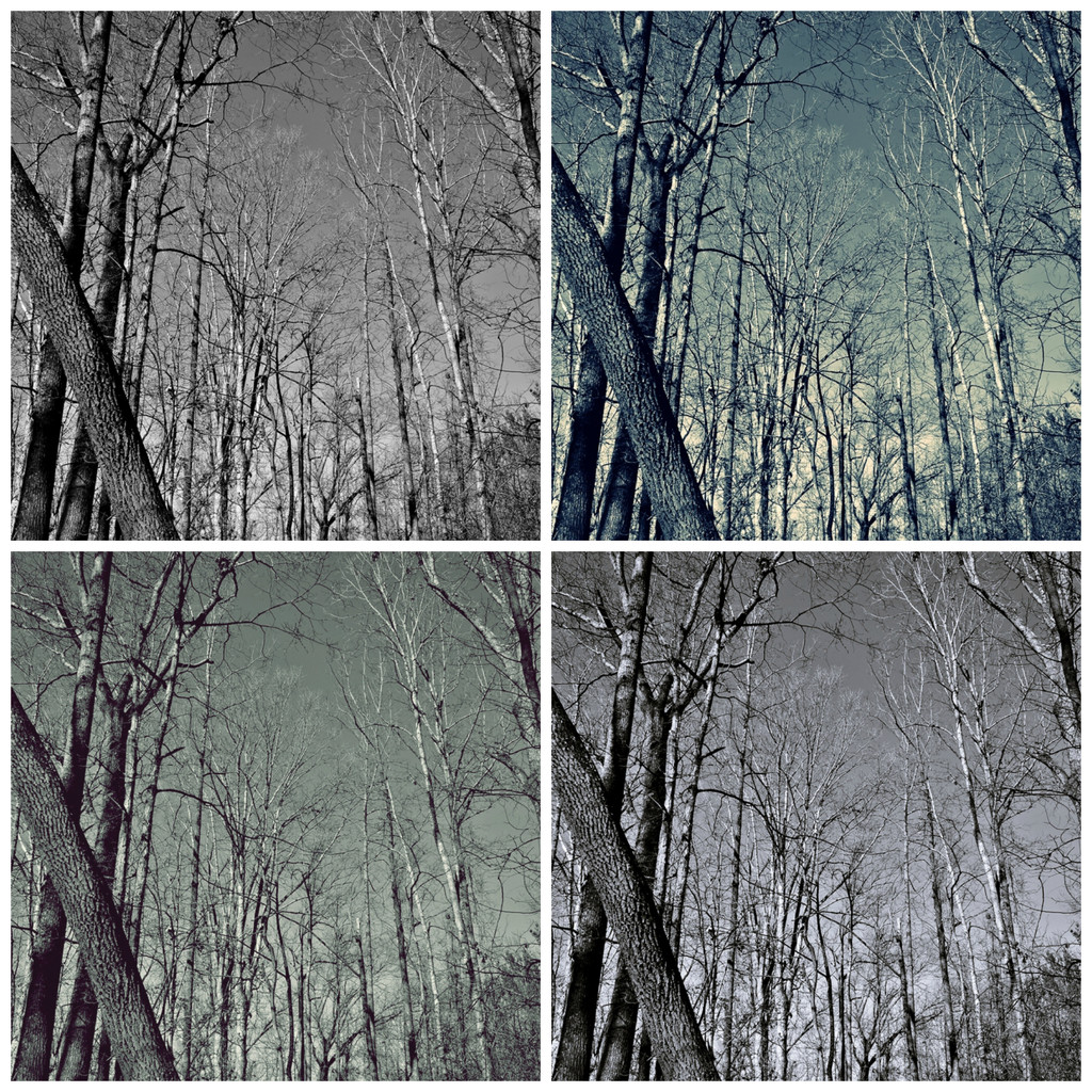 Four shades of mono  by soboy5