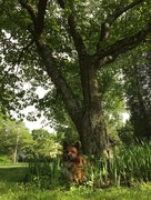 4th Jun 2015 - Hiding under a tree