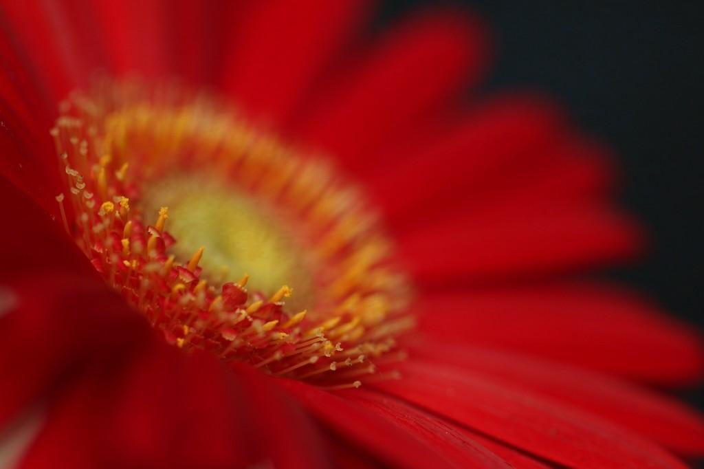Flower by mzzhope