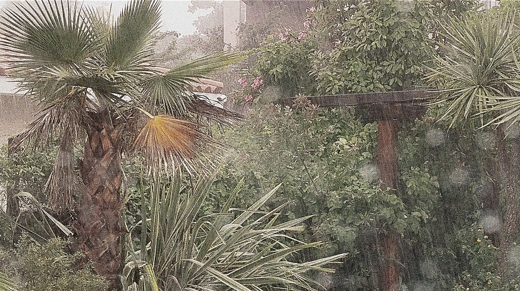 Rain in the garden by laroque