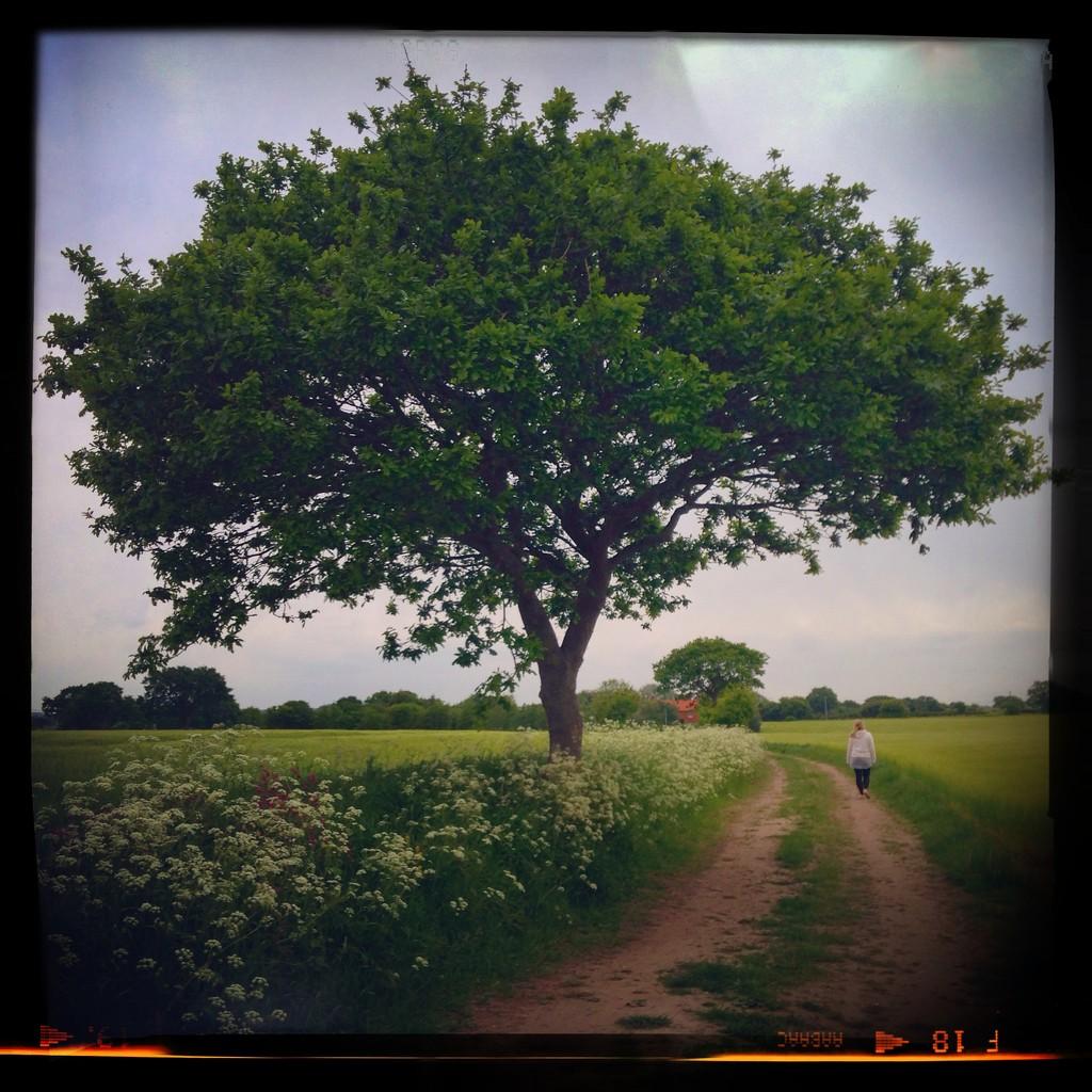 Day 149, Year 3 - Wander In Walsham by stevecameras