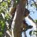 wanna leaf mum! by koalagardens