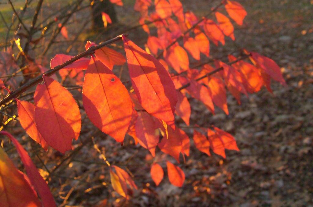 Rows of Sunlit Leaves by julie