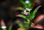 9th Jun 2015 - Tiny Purple Flowers