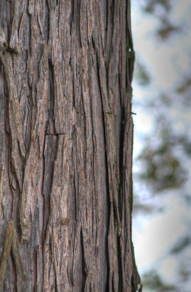 Tree trunk by mittens