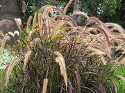 12th Nov 2010 - Coloured Grass