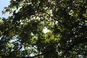 9th Jun 2015 - Sun Through Trees