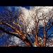 Winter Tree by rich57