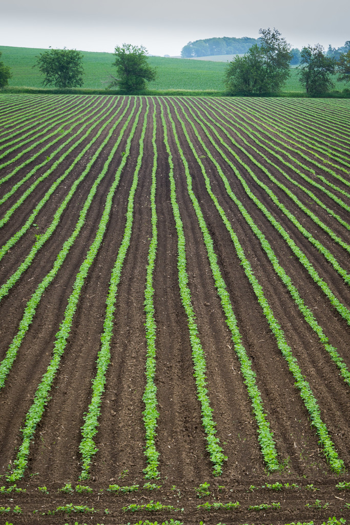 Straight furrows by lindasees