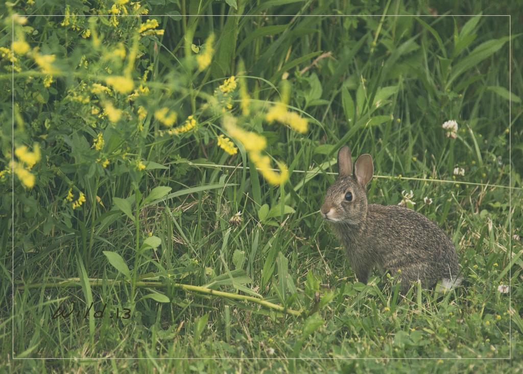 Bunny Buddy by lyndemc