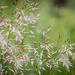grasses.......