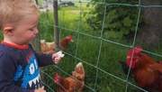 16th Jun 2015 - Feeding the hens