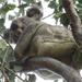 Not lookin by koalagardens