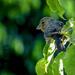 """""""A Finch"""" in a pinch..."""
