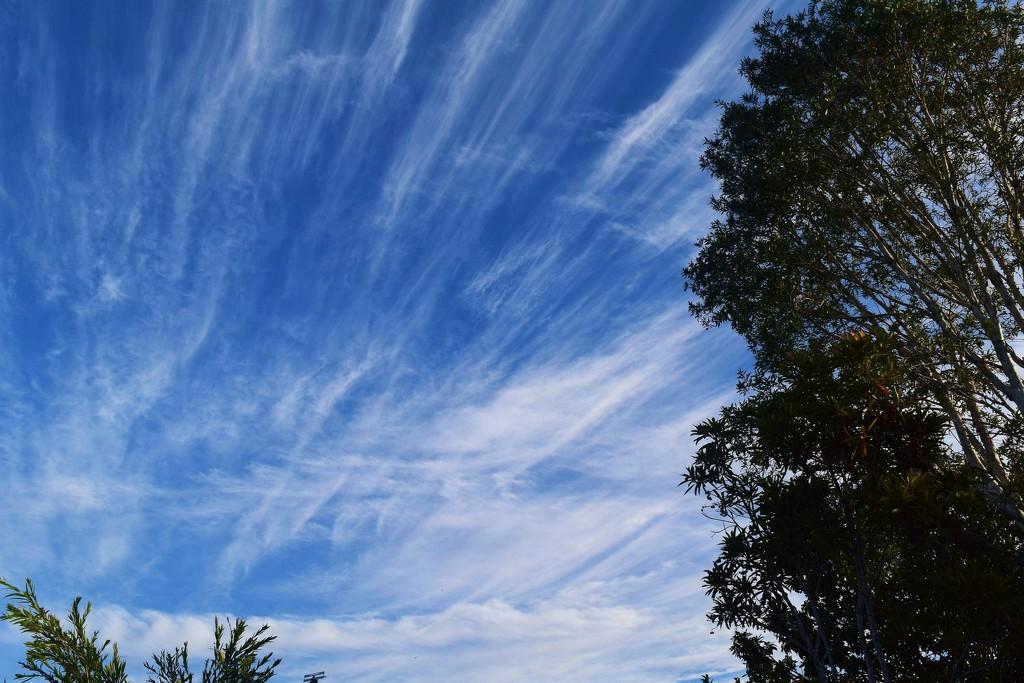 Cirrus Clouds? by happysnaps