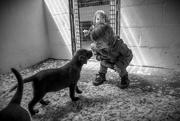 19th Jun 2015 - Puppy love