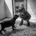Puppy love by overalvandaan