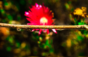 19th Jun 2015 - (Day 126) - A Drop of Flower
