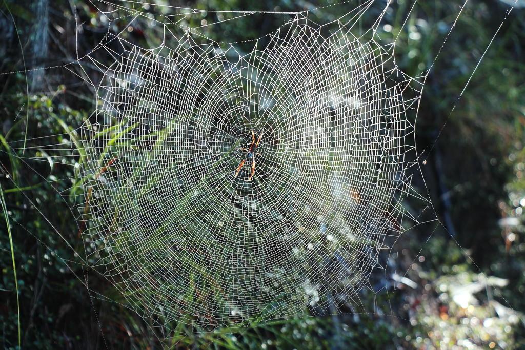 Spider Mansion by terryliv