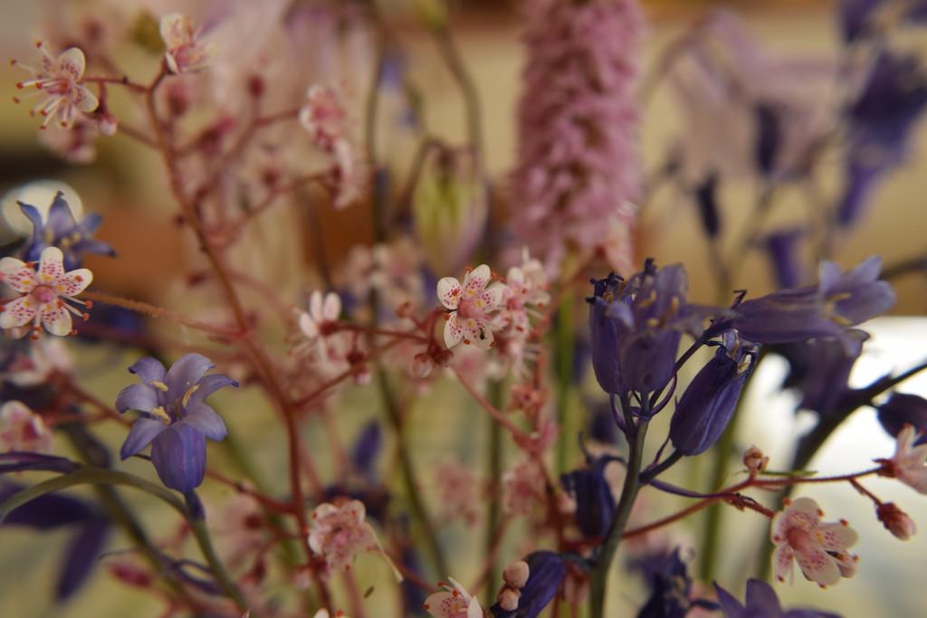 flower arrangement by christophercox