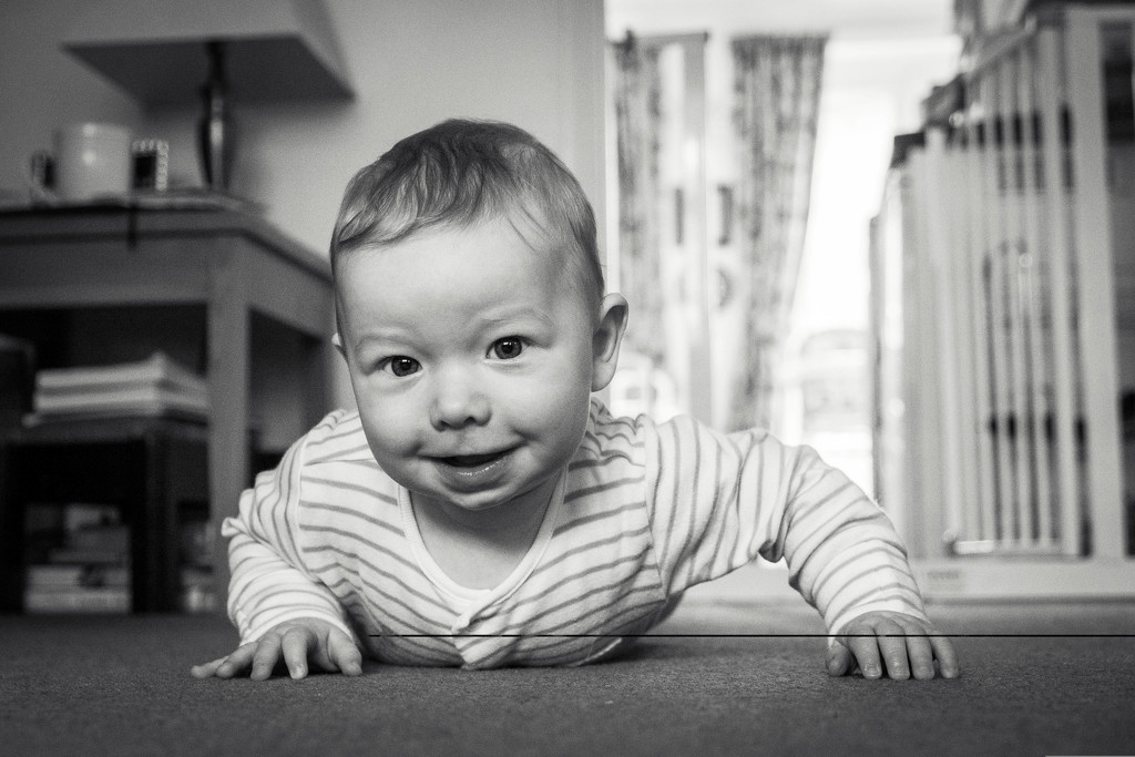 Day 136, Year 3 - Jude Bug On His Way by stevecameras
