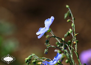 20th Jun 2015 - Flower