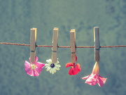 20th Jun 2015 - (Day 127) - Hung Out to Dry
