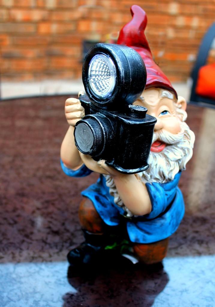 Gnome Photographer by judyc57